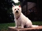 Dog's Family: Carol Ruth and Bo 
